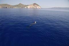 Dolfijn dichtbij Milos, Griekenland Stock Afbeelding