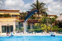Dolfijn die hoog tijdens een show in Varadero, Cuba springen royalty-vrije stock foto