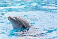 Dolfijn in Gevangenschap stock foto's