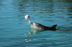 Dolfijn het spelen Stock Foto's