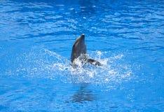 Dolfijn het spelen in het water stock afbeeldingen