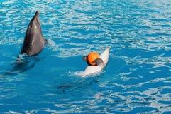 Dolfijn met bal Stock Afbeeldingen