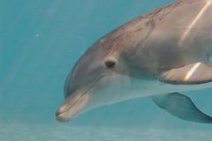Dolfijn onder water royalty-vrije stock foto's