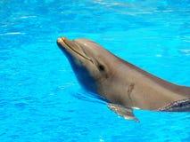 Dolfijn op blauw water   Stock Afbeeldingen