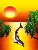 Dolfijn op Zonsondergang Royalty-vrije Stock Afbeeldingen