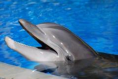 Dolfijn in Poolside stock afbeelding