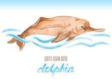 Dolfijn van de zuiden de Aziatische rivier Platanistagangetica stock illustratie