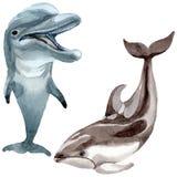 Dolfijn wilde zoogdieren in een geïsoleerde waterverfstijl stock illustratie