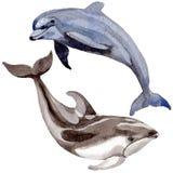 Dolfijn wilde zoogdieren in een geïsoleerde waterverfstijl vector illustratie