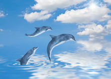 Dolfijnen Royalty-vrije Stock Fotografie