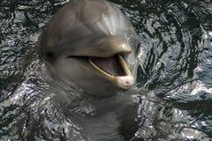 Dolfijnen Stock Foto