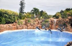 Dolfijnen in de lucht. Royalty-vrije Stock Foto
