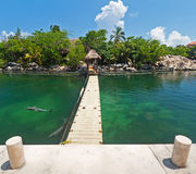 Dolfijnen die bij tropisch eiland zwemmen royalty-vrije stock afbeelding