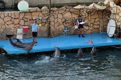 Dolfijnen die met bal jongleren Stock Fotografie
