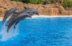 Dolfijnen die over een Kabel springen Stock Foto's