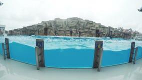Dolfijnen in dolphinarium stock videobeelden