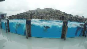 Dolfijnen in dolphinarium stock video