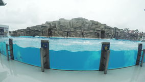 Dolfijnen in dolphinarium stock footage