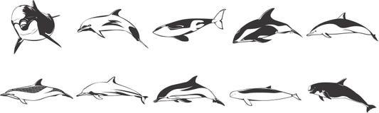 Dolfijnen en Walvissen royalty-vrije illustratie