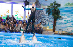 Dolfijnen met trainer Stock Foto's