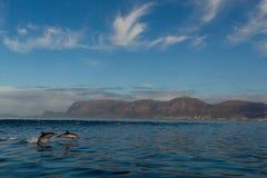 Dolfijnen seaview, Zuid-Afrika Royalty-vrije Stock Afbeelding