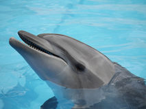 Dolfijnengezicht onder water Stock Fotografie