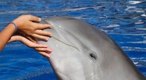Dolfijnspeeltijd royalty-vrije stock foto's