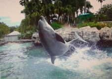 Dolfijnsprong Stock Afbeelding