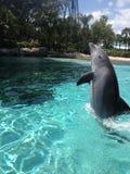 Dolfijnsprong Stock Fotografie