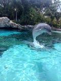 Dolfijnsprong Stock Foto's