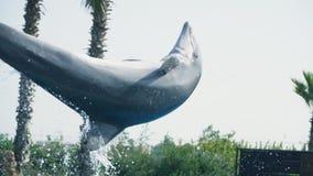 Dolfijnsprongen stock video