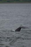 Dolfin`s tail stock photography