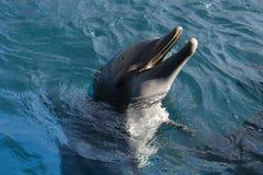 Dolfins che gioca nell'oceano Fotografie Stock