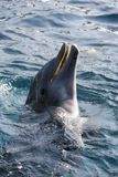Dolfins playing in the ocean. Adorable Dolfins playing in the ocean Stock Image