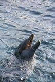 Dolfins que joga no oceano fotos de stock