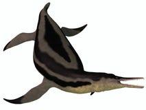 Dolichorhynchops Plesiosaur auf Weiß Lizenzfreies Stockfoto