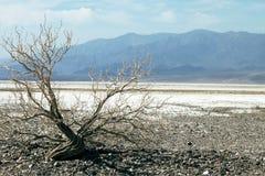 dolina śmierci zdjęcia stock