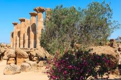 Dolina świątynie, Agrigento, Sicily, Włochy Obraz Royalty Free
