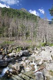 Dolina de studena de Mala - vallée dans haut Tatras, Slovaquie Photo stock