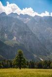 Dolina di Logarska Fotografia Stock