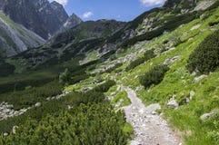 Dolina di Mengusovska, traccia di escursione importante al supporto Rysy, alte montagne di Tatra, Slovacchia, vista stupefacente  Immagini Stock