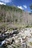 Dolina di studena di Mala - valle in alto Tatras, Slovacchia Fotografia Stock