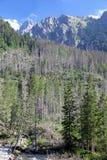 Dolina do studena de Mala - vale em Tatras alto, Eslováquia Foto de Stock Royalty Free