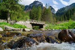 Dolina Koscieliska Narodny Tatransky parkerar tatry vysoke poland arkivfoton