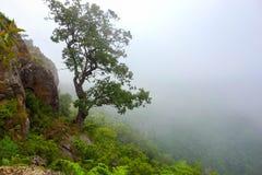 Dolina mgła fotografia royalty free