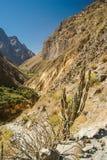 Dolina między skałami Fotografia Stock