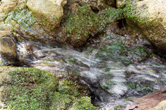 Dolina motyl, Rhodes Fotografia Stock