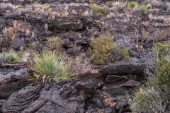 Dolina ogienie w Nowym - Mexico obraz stock