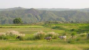 Dolina solankowe pasmo góry Fotografia Stock