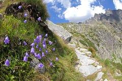 Dolina studena Mala - долина в высоком Tatras, Словакии Стоковое Изображение